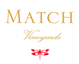 matchlogo up Match Vineyards Update
