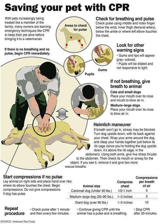 Canine CPR